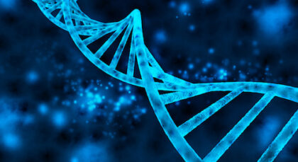 Genome of cable bacteria revealed