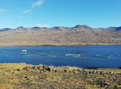 Fish farm sediments in Iceland: are cable bacteria there and what are they up to?