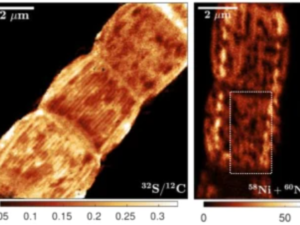 New insights in conductive bacterial wires